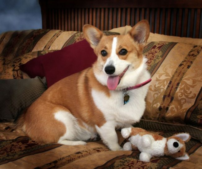 Як лікувати глисти у собак