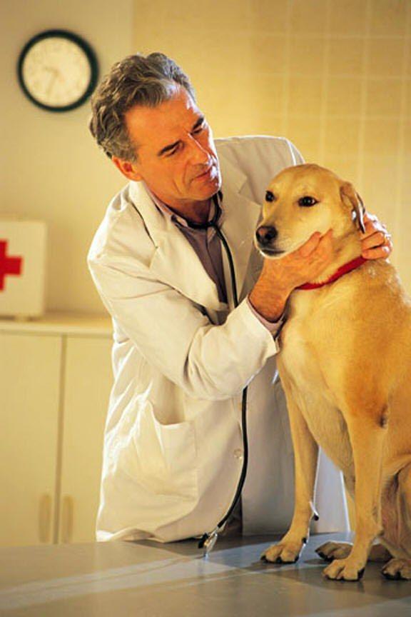 Як лікувати суглоби у собак