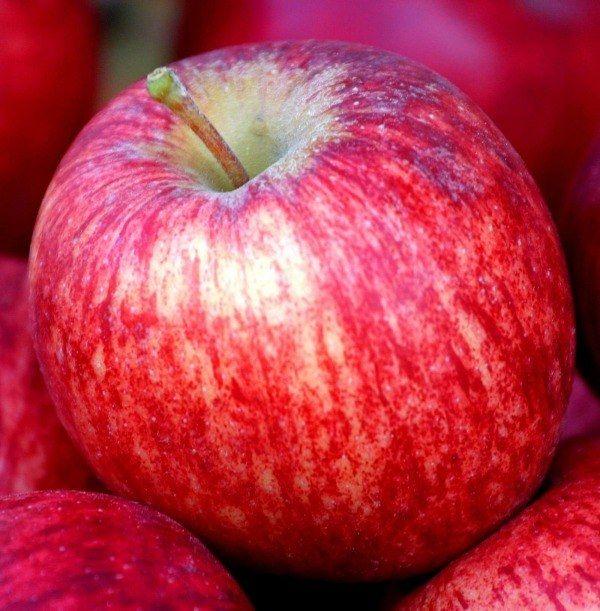 Як намалювати яблуко аквареллю