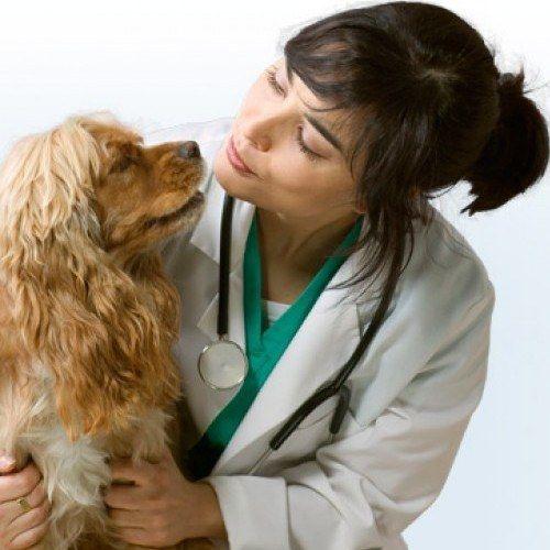 Як виміряти тиск у собаки