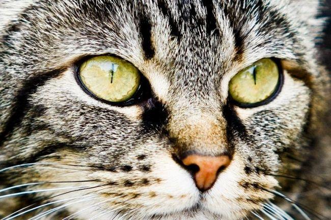 Як малювати очі кішки