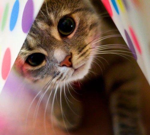 Як вивести кліщів у кішки