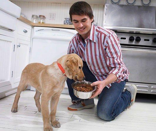Яким м`ясом треба годувати собак