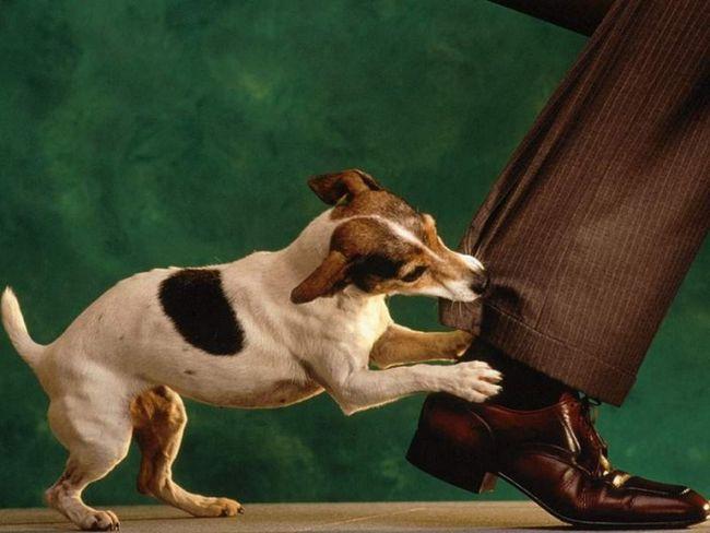 Як позбутися від алергії на собак