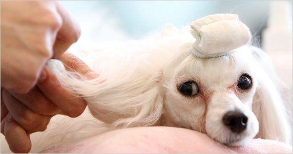 Як відкрити салон для собак