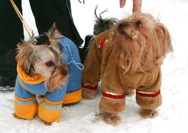 Як зшити комбінезон для маленької собаки