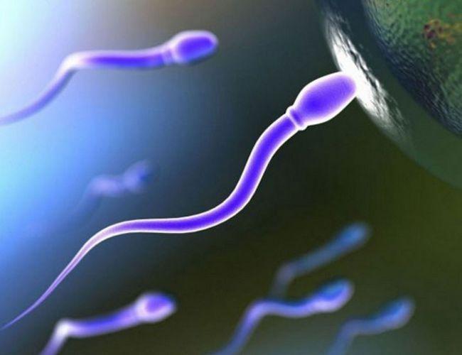 Як завагітніти хлопчиком