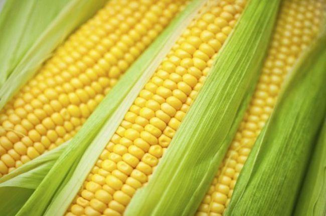 Скільки потрібно варити кукурудзу