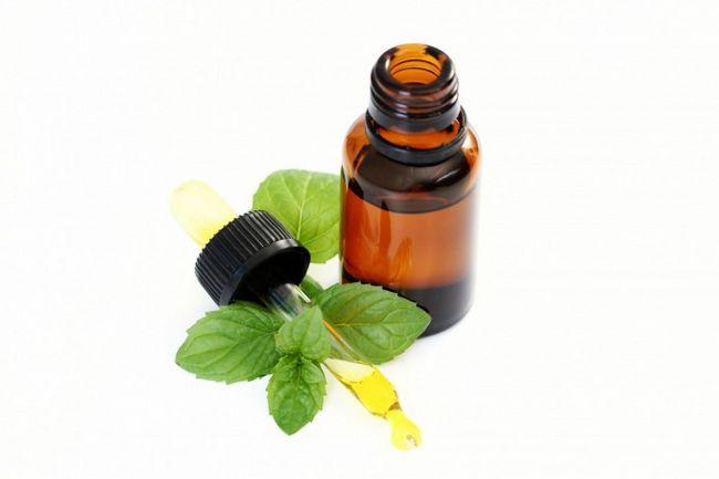 Властивості і застосування ефірного масла м`яти луговий